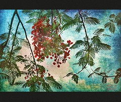 Flamboyant Tree (ulli_p) Tags: flowers blue trees red tree green art texture nature colors beautiful photoshop thailand colorful asia southeastasia colours delonixregia botany flametree textured isan photomix likeapainting treeflower artisticexpression exoticflowers amazingcolours aworkofart flickraward texturedphoto ruralthailand unseenasia earthasia auniverseofflowers awardtree awesomeblossoms tatot artofimages exoticimage mygearandme canoneoskissx5
