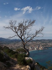 Lonely Tree (Jonathan Rowland) Tags: spain lonelytree penyaldifach