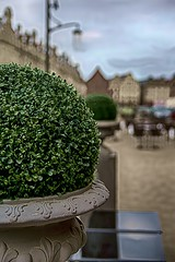 Boule de buis sur la place / Boxwood ball on the place  [Explore # 133 le 28 Avril 2013] (Napafloma-Pictures) Tags: france grandplace fr arras pasdecalais 2013 explore133 ruedelataillerie sonyslta77vtamron1750