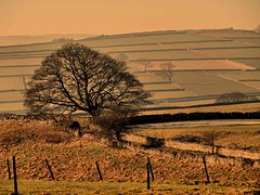 Golden PeaK District (saxonfenken) Tags: sunset tree fence geotagged superhero fields moors stonewall walls goldenhour bigmomma 7055 favescontestwinner friendlychallenges thechallengefactory herowinner pregamesweepwinner singleone 7055tree