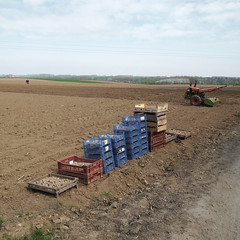 Les pommes de terre du 1er mai (L'imaGiraphe (en travaux)) Tags: france field outdoor potato squareformat plantation hd agriculture extrieur nord 59 champ pommedeterre patate formatcarr motoculteur marachage villerspol tournichette