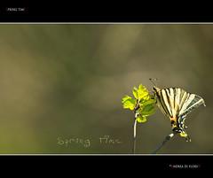 Spring Time (Andrea di Florio (8.000.000 views!!!)) Tags: 2 6 mountain 3 primavera alberi landscape 1 5 4 7 campagna albero montagna borgo paesaggio farfalla scorcio abruzzo appennino bosco pescosansonesco torredepasseri mygearandme mygearandmepremium mygearandmebronze mygearandmesilver mygearandmegold mygearandmeplatinum mygearandmediamond blinkagain andreadiflorio flickrstruereflection2 flickrstruereflection6 rememberthatmomentlevel1 rememberthatmomentlevel3 vigilantphotographersunite vpu2 vpu3 vpu4 vpu5 vpu6 vpu7 vpu8 vpu9