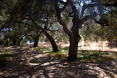 Trees & Shadows on Eagle Rock Trail - Topanga State Park, California (ChrisGoldNY) Tags: california trees nature poster outdoors losangeles shadows forsale hiking branches trails socal posters albumcover bookcover southerncalifornia topanga westcoast bookcovers hikes albumcovers eaglerock gridskipper laist topangastatepark losangelescounty jaunted eaglerocktrail chrisgoldny chrisgoldberg chrisgold chrisgoldphoto chrisgoldphotos