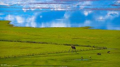 The shangri la prairie (maya_jason) Tags: 旅游 风景 自然 西藏 摄影 香格里拉 《影像视觉》户外摄影大赛