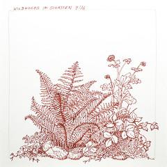 growing wild (katie.charcoal) Tags: flowers plants ink garden sketch pflanzen blumen garten zeichnung 2016 fineliner