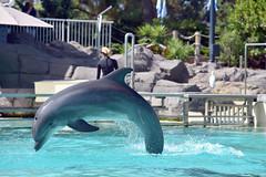 Dolphin at Seaworld in San Diego (GMLSKIS) Tags: sandiego seaworld dolphin california nikond750