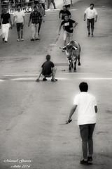 Vaquilla por las calles de Caada Rosal (MANUEL GARCA LEN) Tags: caadarosal carrosaleos calles cultura caada fiestasytradiciones fiestas