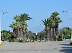 Palm Trees (illetyus / Instagram @illetyus09) Tags: palm treee izmir konak fair fuar summer travel illetyus illetyus09