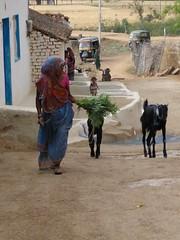 KhajurahoCycling046 (tjabeljan) Tags: india khajuraho cycling platteland village dorp