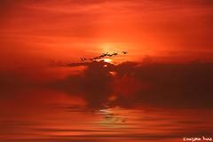 I need vitamin sea!  (gusdiaz) Tags: sunrise amanecer dania beach florida fl sand ocean vaction oceano vacaciones hermoso relajante colorido sol sun playa aves birds