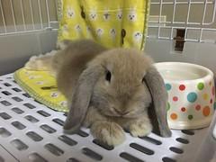 () Tags: rabbitt bunny pet