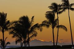 Ko Olina Dusk (lycheng99) Tags: koolinabeachresort koolina beach beachresort palmtree palm trees dusk goldenmoment goldenhour golden goldenlining cloud ocean horizon silhouette sky color oahu hawaii nature landscape