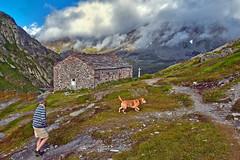 HaPPy hour at the Great Saint Bernard Pass and its Morgue . The wind is blowing on the Grand Combin and  Mont Vlan. No 2321. (Izakigur) Tags: feel switzerland lasuisse laventuresuisse liberty myswitzerland musictomyeyes swiss suiza suisia sussa suizo suisse svizzera nikkor nikond700 nikkor2470f28 gransanbernardo grossersanktbernard greatstbernardpass europa summer dog
