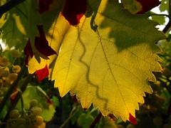 primo giorno d'Autunno (rosy.c) Tags: autunno colori foglia