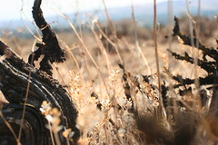 seeds (.:sean fitzgerald:.) Tags: dof depth field desert steppe rexagon 28mm 28 automatic yakima cowiche canyon