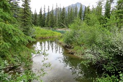 Quiet Wetland Along the Bow (Patricia Henschen) Tags: montane forest boreal mountain mountains banffnationalpark alberta canada parks parcs nationalpark rockies canadian northern rockymountains wetland