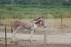 11072016-DSCF4914-2 (Ringela) Tags: åsna equus africanus asinus donkey âne commun camargue juli 2016 france domestic fujifilm fuji xt1 animals