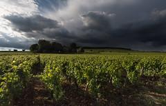Shower over the vineyard (MrBlackSun) Tags: chateau aloxe corton aloxecorton bourgogne burgundy france wine vin wineyard vigneron nikon d810 nikond810 vineyard landscape scenery