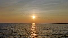 Sunset at Rif/Engelsmanplaat (Alta alatis patent) Tags: sunset rif engelsmanplaat hightide birds