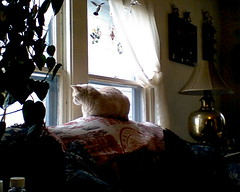 Interducing: Max (ingridfrd) Tags: friend buddy cat pet visitor upstairs indoors outsite window