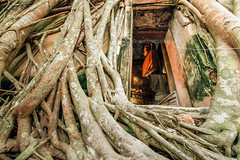 Buddha Statue and Tree Roots (baddoguy) Tags: ancient architecture banyantree buddha chapel colorimage covering famousplace goldcolored harassment horizontal landscape nopeople oldruin photography root ruralscene sculpture southeastasia statue templebuilding thailand traveldestinations unusualangle window amphawa