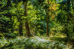 Deep in the woods (grahamd4) Tags: woods green trees leaves foliage brown