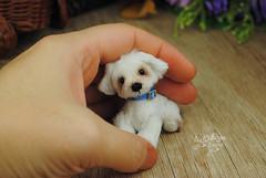 goober10 (Zhanna Zolotina) Tags: miniature dog ooak handmade toyzz tinydolhousetoyzz altair teddy bear dollhouse puppenhaus blythe