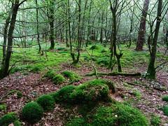 Wolfgang-Hanau Forest, Germany (asterisktom) Tags: rotelache wolfgang hanau forest wald 2016 trip2016kazakheuro july germany phone
