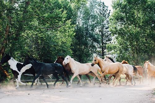The herd is off the clock