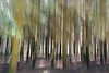 just a forest (Gies!) Tags: forest bos icm bewogen