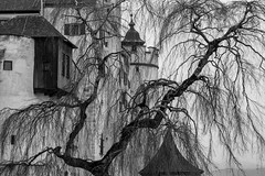 Discovering Salzburg, Austria (virtualwayfarer) Tags: travel winter blackandwhite bw alps tree salzburg castle austria spring europe unesco backpacking fortress austrian worldheritage travelogue soundofmusic festung centraleurope austrianalps baroquearchitecture salzachriver hohensalzburgcastle alexberger virtualwayfarer
