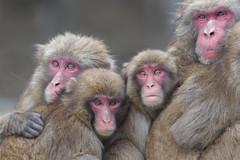 Family (Masashi Mochida) Tags: family japan monkey
