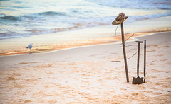 Anzac Day - Bondi 2013 (Paul Amestoy) Tags: morning autumn sea newzealand bird water bondi army photo sand waves pacific bokeh oz seagull sydney australian australia depthoffield photograph remembrance aussie bondibeach gallipoli anzac anzacday f28l 2013 northbondirsl paulamestoy