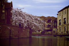 Cambridge (Tom Cadrin) Tags: uk cambridge england love nature water beautiful architecture canon buildings river cherry 50mm spring amazing colorful europe peace vibrant magic think blossoms style punting t4i