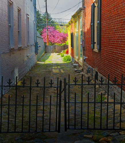 Alley with Pink Tree