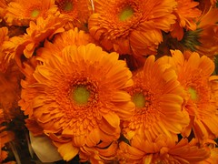 today is queen's day in the NL :) (muffett68 ) Tags: orange queensday 43013 cmwdorange