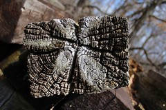 Weathered Wood (Shutterfool) Tags: lake wisconsin rockformations castlerock glaciallake ushighway9094 prehistoricisland