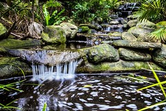 Peaceful waterfall (Jacqui Hunt) Tags: longexposure trees plants motion green water beautiful canon reflections waterfall moss rocks peaceful australia running perth 6d rainforrest canon6d