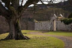 abbey road (Ray Byrne) Tags: tree gate path alnwick northumberland northeast raybyrne hulnepark hulneabbey byrneoutcouk webnorthcouk