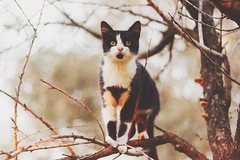 + (maira.gall) Tags: autumn winter tree film cat matte
