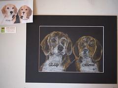Two Beagles (wandklex Ingrid Heuser freischaffende Künstlerin) Tags: portrait dog chien black ingrid beagle animal drawing hund tier dache caran huser supracolor tierportrait wandklex wandkleks