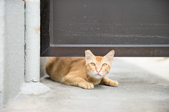 Street Cat. (bgfotologue) Tags:   2016 500px bgphoto cat cats coast fishingvillage hk heritage hongkong image island landscape lantau mangroove nature oldtaiopolicestation outdoor photo photography policestation saltedfish shrimppaste stilthouses taio tanka venice veniceoftheorient village waterparade bellphoto tourism