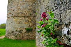 Roman fort walls of Portchester Castle (Andrey Sulitskiy) Tags: uk england portchester hampshire