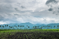 On the road! (EkimMaacap) Tags: dumaguete bais ontheroad landscape photography philippines visitphilippines negros noon instagram ekim fujifilmxe2 fujifilm sugarcane fields coconut mountains clouds