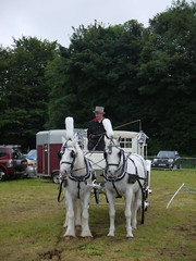 White (Katie_Russell) Tags: ni nireland ireland northernireland ulster norniron garvagh show clydesdale coderry colderry colondonderry countyderry countylderry countylondonderry car cars vintage vehicle vehicles horse horses white cart trap