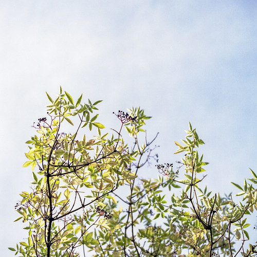 Summer branches - part 6