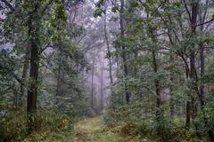 Magic Forest (ralfkai41) Tags: bume trees nebel magie magic nature mist fog woods outdoor forest wald natur landschaft