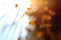 Memories of fall / Sjecanje na jesen (Gordana AM) Tags: wwwgordanaphotocom gordanamladenovic gordana photography photographer photo portcoquitlam bc britishcolumbia vancouver lowermainland canada lepiafgeo fall autumn october memory blur painterly out focus lb lens baby lensbaby tiltshift wind orange blue grey leaves motion impression