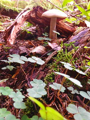 IMG_20160831_115335 (Alisa Jahary) Tags: nature forest mushroom mushrooms micology photo
