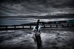 Running free (Explored) (Steve.T.) Tags: horse horses frinton frintononsea beach seaside sky clouds dramaticsky dramaticclouds whitehorse nikon d7200 sigma18200 essex horserunning excersising horseandrider ridingahorse beachhuts
